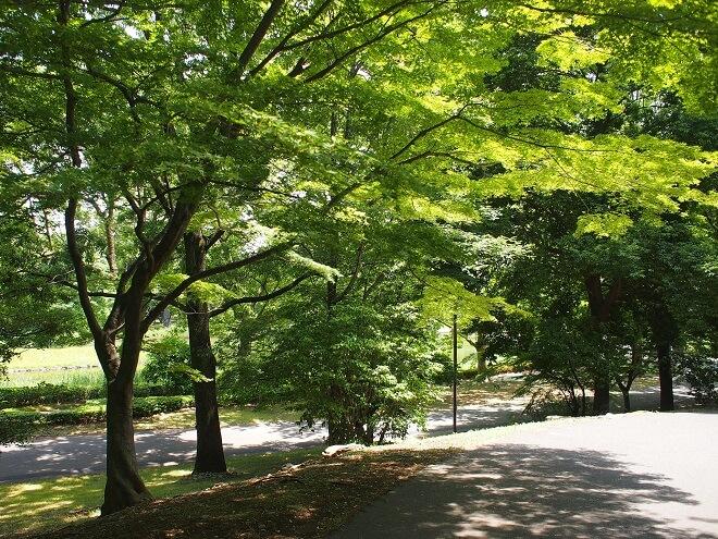 東京デート_昭和記念公園2