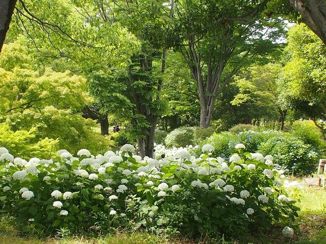 東京デート_昭和記念公園