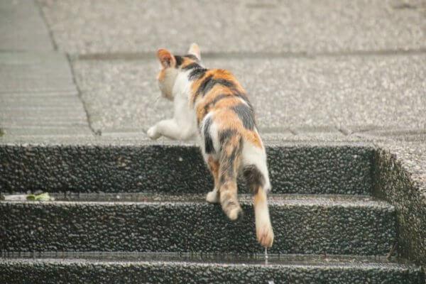 台湾 猫村1
