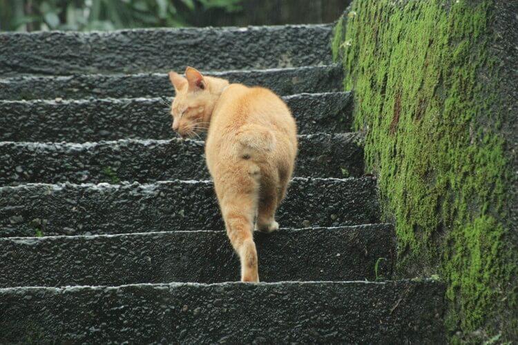 台湾 猫村21