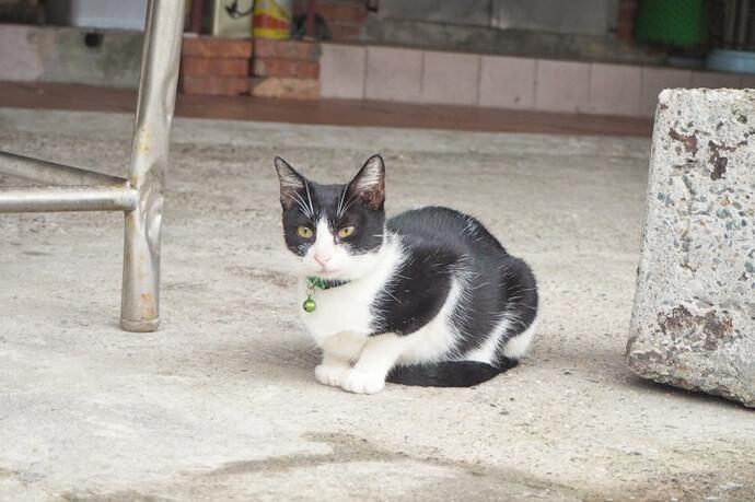 台湾 猫村19