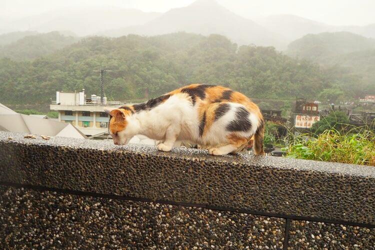 台湾 猫村18